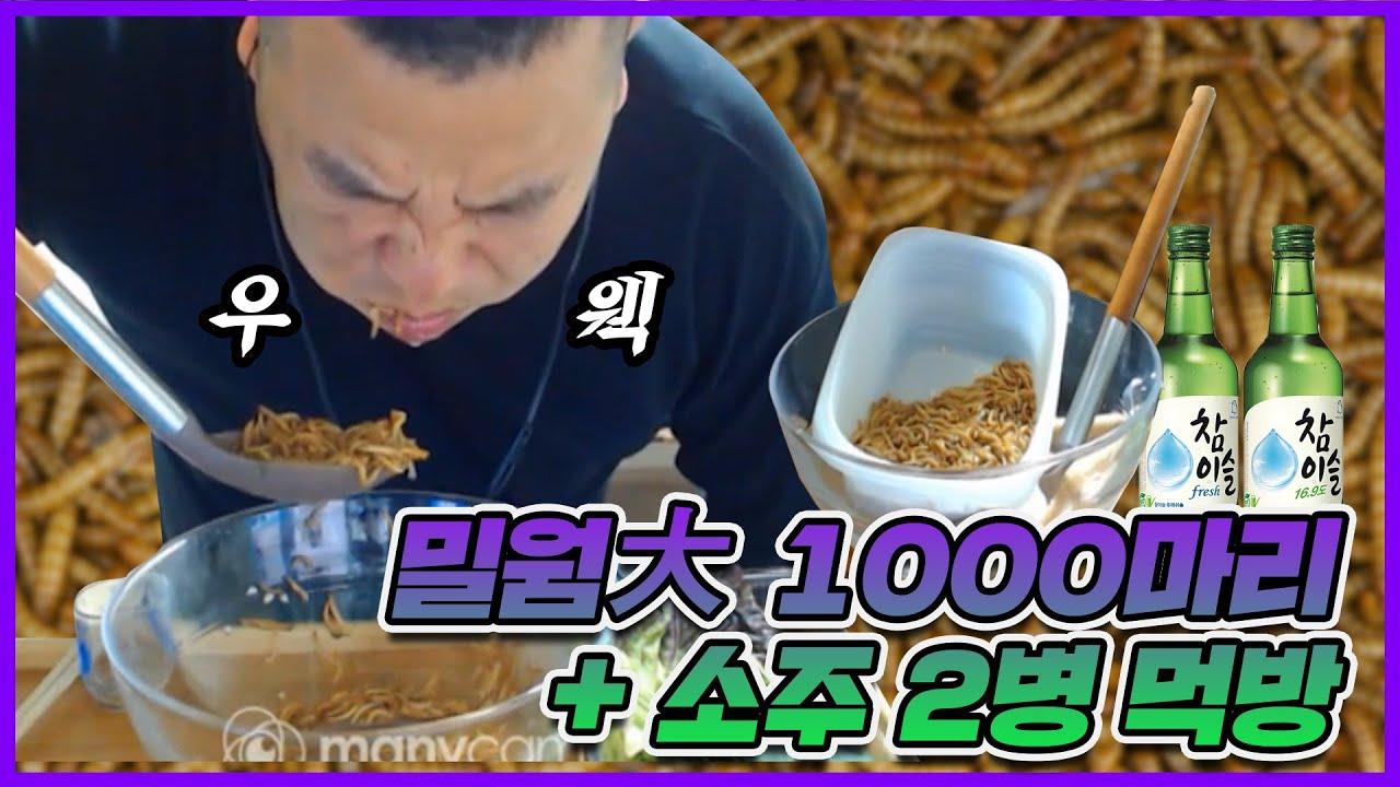 [부산타이슨] 소주에 밀웜 1000마리 말아먹기?!