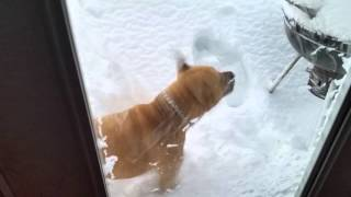 Pups try to potty in the snow