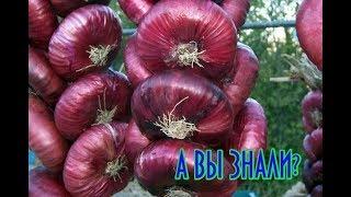 КАК употреблять фиолетовый лук, чтобы навсегда избавиться от болезни!
