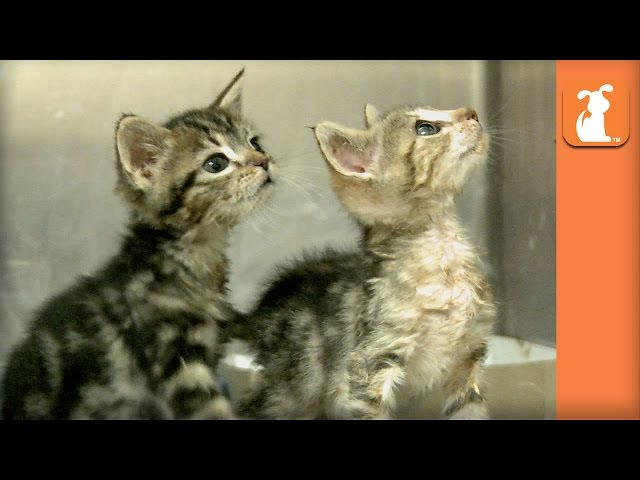 Two Baby Kittens Almost Didn't Survive Birth