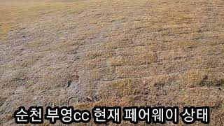 순천부영cc 페어웨이 상태
