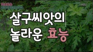 살구씨앗의 놀라운 효능[약초방송]