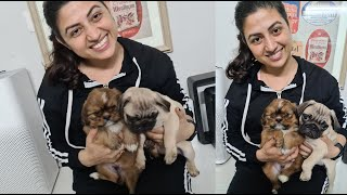 Meet Our Babies...New Members in Our Family... | Prateek Rathee