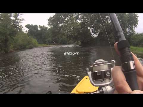 how to catch white perch
