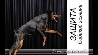 Нападение: Собака телохранитель. Doberman defends the owner
