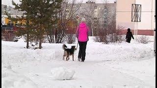 За выгул собаки без намордника на детской площадке - штраф до 2 тысяч рублей