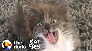 Kitten Who Wasn't Supposed To Live Is The Feistiest Girl Now   The Dodo Cat Crazy