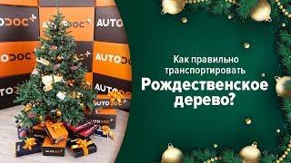 Как правильно транспортировать Рождественское дерево? 🎄