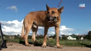 Спасение собаки в Гродно (Dog Rescue Grodno)