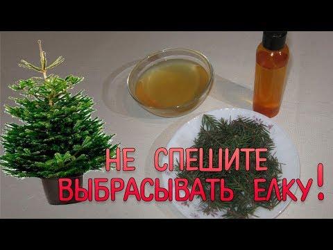 Как приготовить хвойный экстракт,  хвойный сироп и освежитель воздуха из Новогодней елки