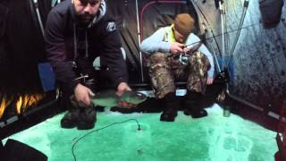 North Shore Trout Kings Many crazy coho salmon ice fishing go pro lake superior Duluth MN