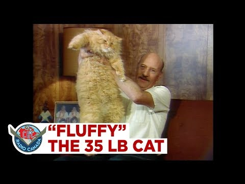 The 35-pound cat named Fluffy, 1987
