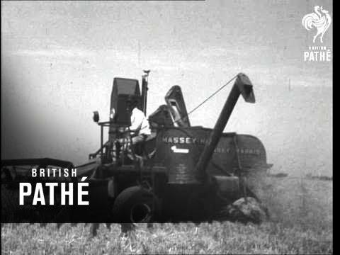 Wheat Harvesting (1948)
