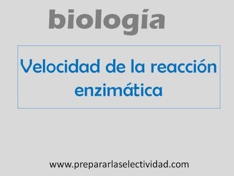 Límites a la velocidad de reacción enzimática
