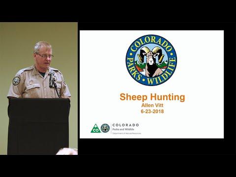 Colorado Hunting Tips: 'Bighorn Sheep Hunting 101'