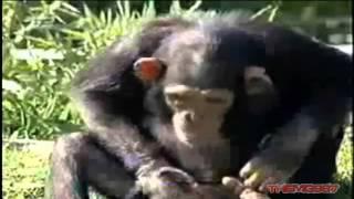 Caidas y videos de risa - LOQUENDO - part 2