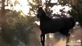 Клип лошади
