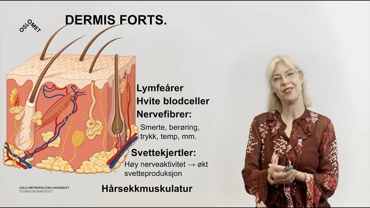 Huden (3/3): Dermis og subcutis
