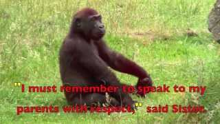 a-real-gorilla-family---children-s-story
