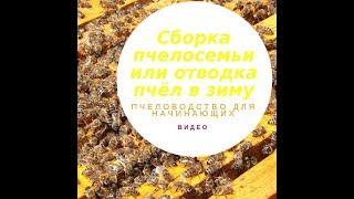 Пчеловодство для начинающих видео сборка пчелосемьи или отводка пчел в зиму