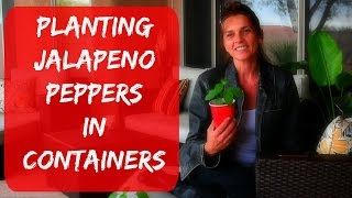 Growing Jalapeno Peppers In Containers - Indoors Or Outdoors in Arizona