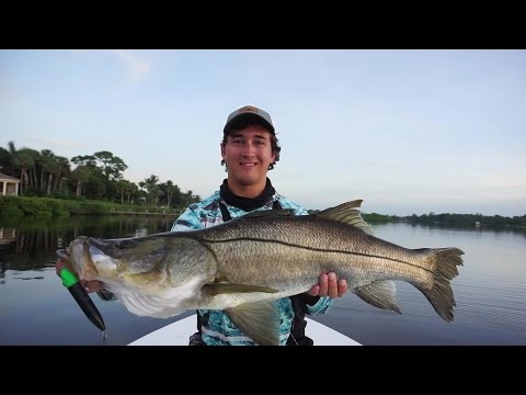 Huge Snook on Top