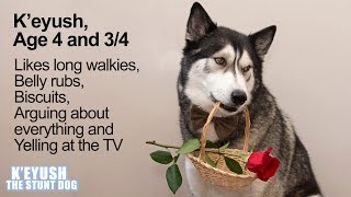 My Husky's Funny Dating Profile | Happy Valentine's Day