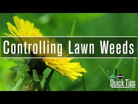 Lawn Weed Control | Scotts Miracle-Gro Canada