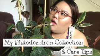 Philodendron Collection & Care Tips || Spring '19