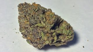 """Granddaddy Purple"" - (Strain Review)"