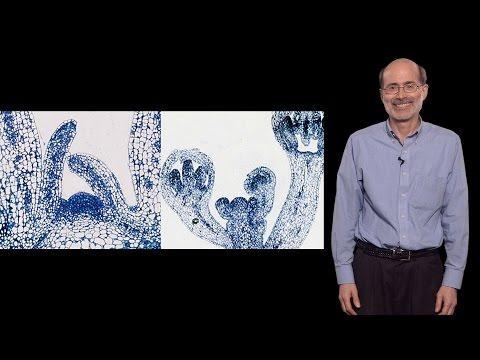 "Richard Amasino (U. Wisconsin-Madison, HHMI) 1: How plants ""know"" when to flower"