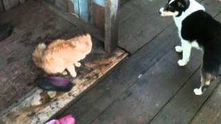 the love of a cat and dog. любовь кота и собаки