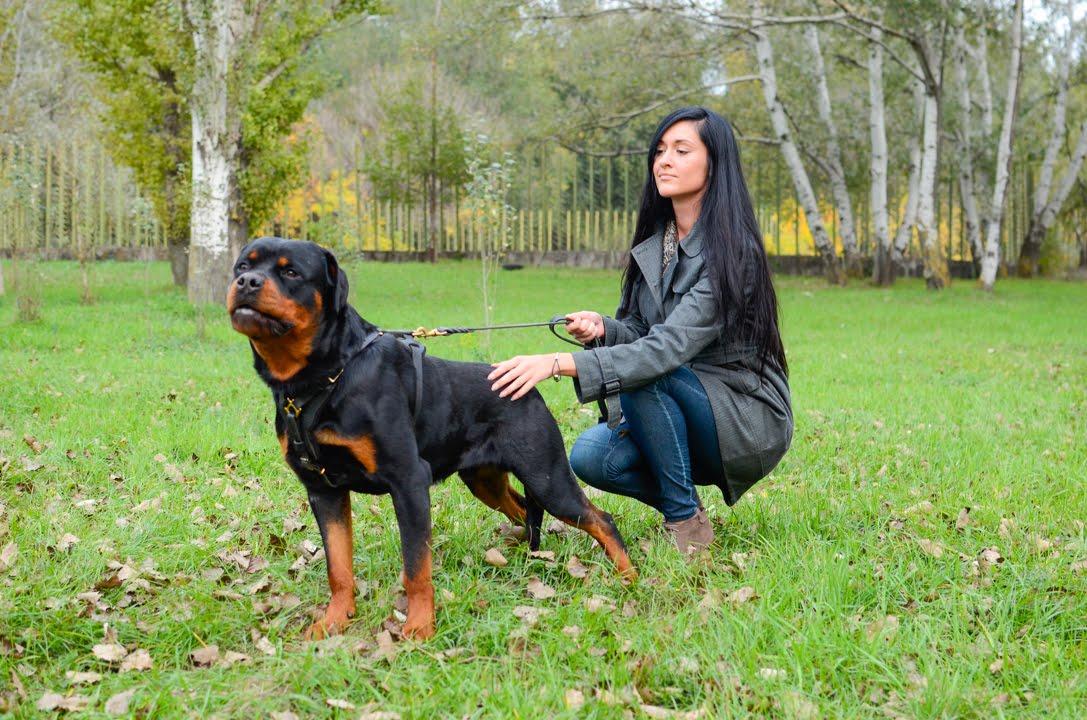 Luxury Leather Dog Harness