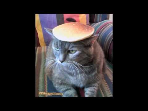 Pussy pancake