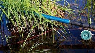 БЕШЕННЫЙ КЛЁВ КАРАСЯ Ранним Утром на Поплавочную Удочку Рыбалка в Башкирии
