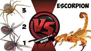 ESCORPIÓN VS TRES ARAÑAS - COMENTADO
