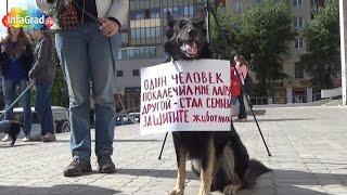В Архангельске прошла всероссийская акция против уничтожения бездомных животных