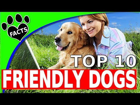 Top 10 Friendliest Dog Breeds 10 Family Friendly Dogs 101 - Animal Facts
