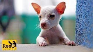 Animal Rescue Organisation in Pune, India