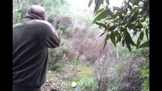 Caccia grossa in Sardegna missile
