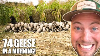 74 GEESE IN A MORNING! - I LEFT THE ELK WOODS FOR THIS