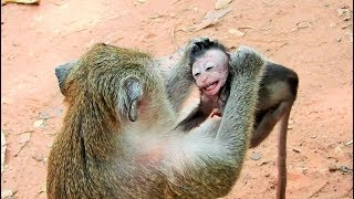 Poor Baby Monkey Very Small Mom Weaning thumbnail