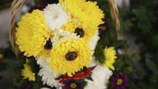 10 мая - Праздник цветов в Азербайджане!(По инициативе исполнительной власти города Баку ежегодно в азербайджанской столице проводится ряд меропр..., 2016-05-09T08:01:07.000Z)