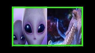Científicos sugieren que los pulpos son extraterrestres - Noticias