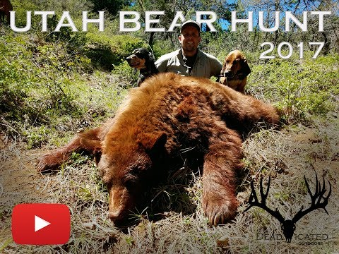 Utah Archery Bear Hunt 2017