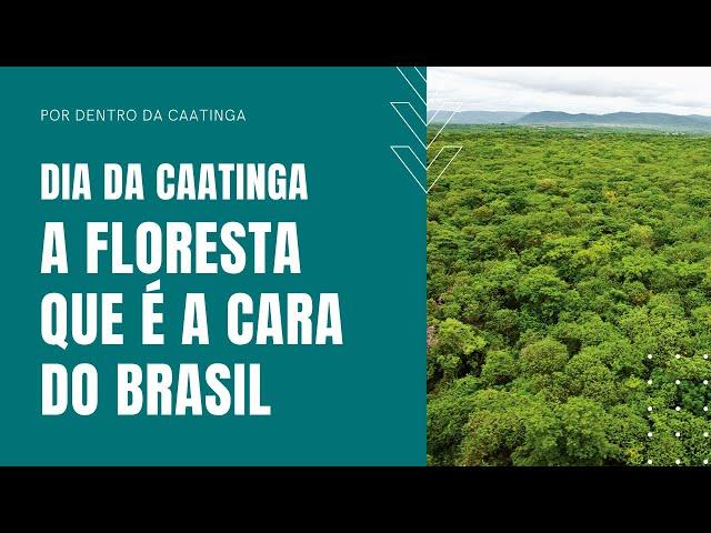 Caatinga, a floresta que é a cara do Brasil