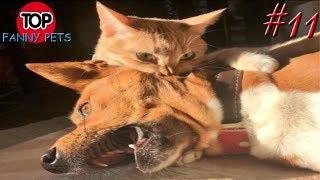 ПРИКОЛЫ 2019 ТОП СМЕШНЫХ ВИДЕО С КОТАМИ Смешные животные Смешные кошки TOP FUNNY PETS