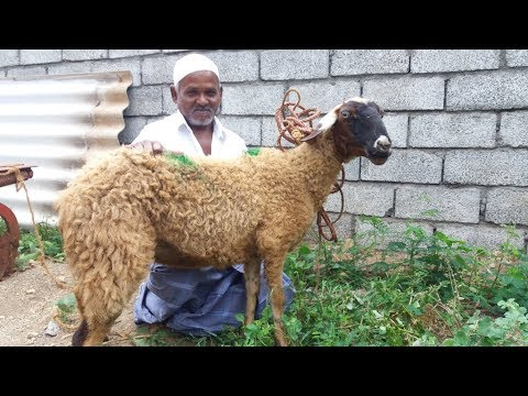 RAMZAN SPECIAL / Full Goat Biryani by My Muslim Friend in My Village
