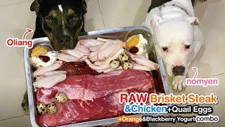 Pit Bulls eat RAW Brisket Steak&Mandarin&Blackberry Yogurt combo [ASMR] MUKBANG 犬が生の肉を食べる[咀嚼音]