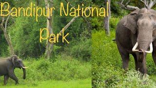 Elephant Mud bathing in Roadside Near Forest